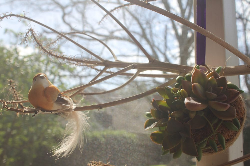 Succulent Kokedama + Bird