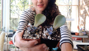 sucs for you propagation