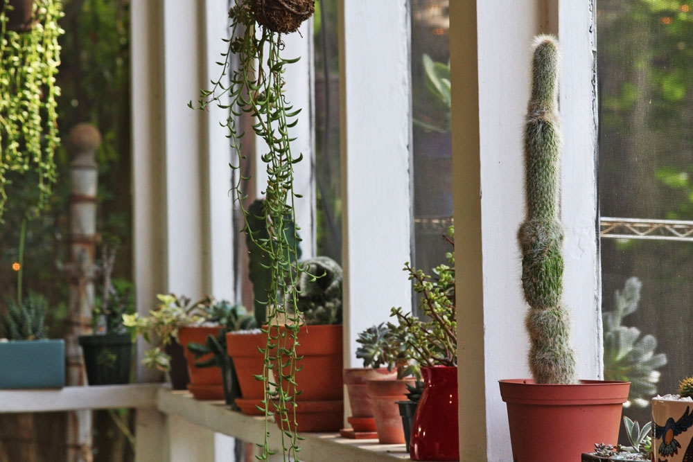 Sucs for You Cacti and Succulent supplies