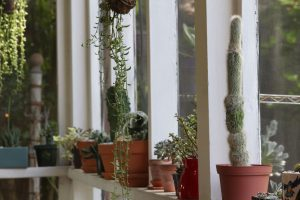 Sucs for You Supplies for Cacti and Succulents