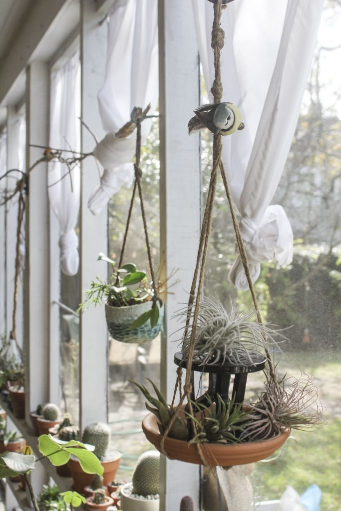 T. tectorum, T. caput medusae, T. ionantha druid, T. magnusiana- macrame hanging clay saucer, mini table, put a bird on it