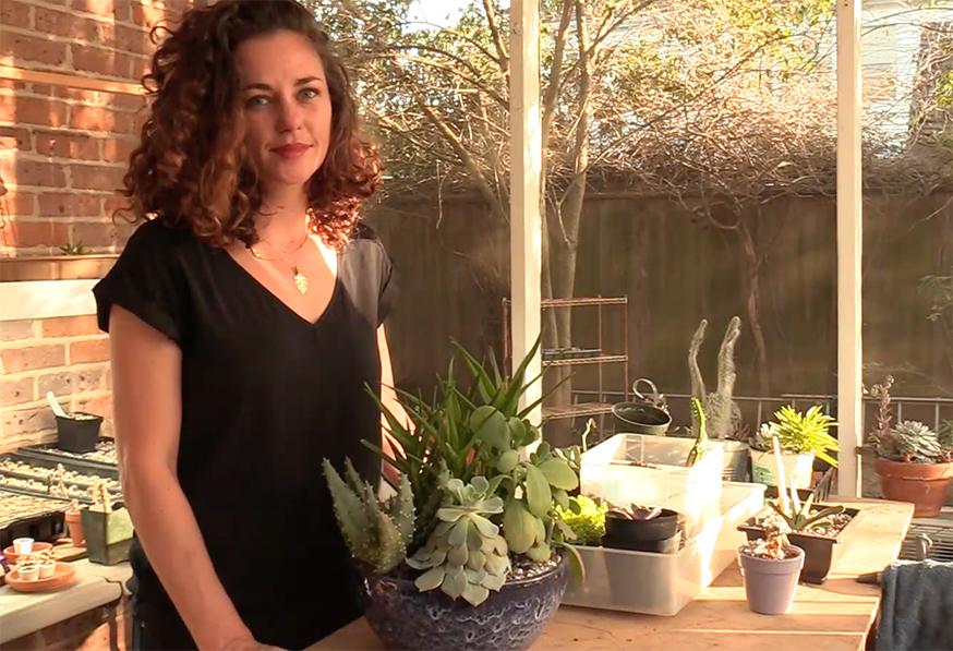 Repair stretched succulents