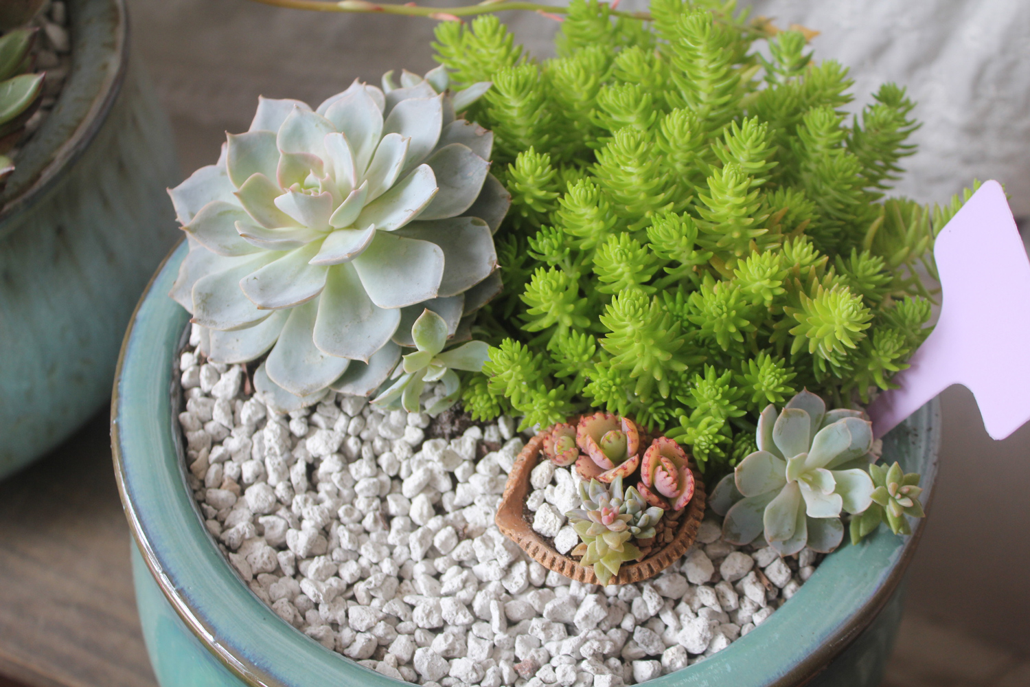 The Basic Dos And Don Ts For Succulents Sucs For You