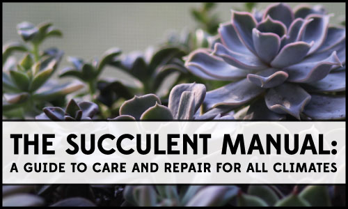 The Succulent Manual