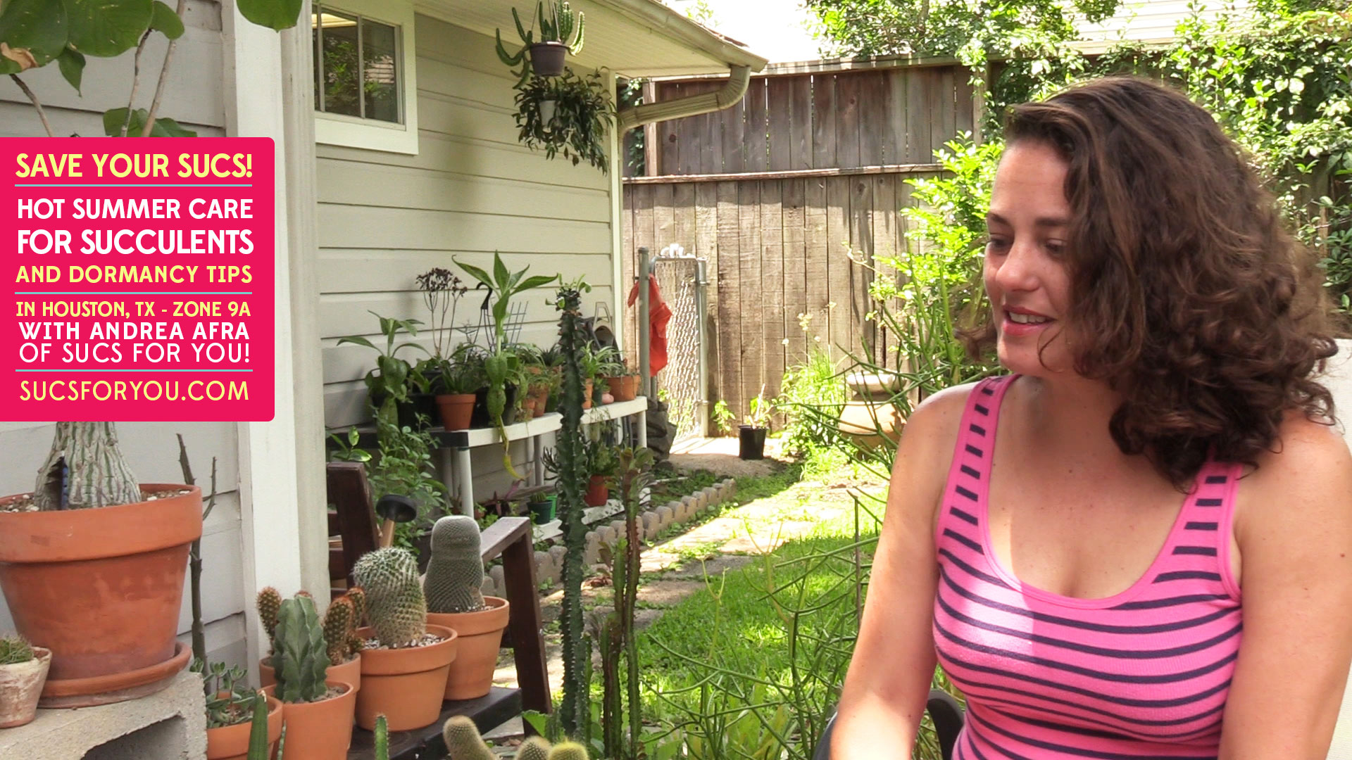 Hot Summer Care for Succulents and Dormancy Tips