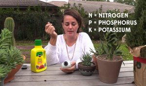 Fertilizer for succulents and cacti