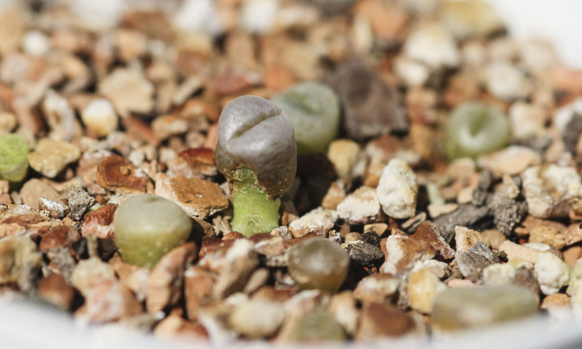 Lithops progress splitting - October 22