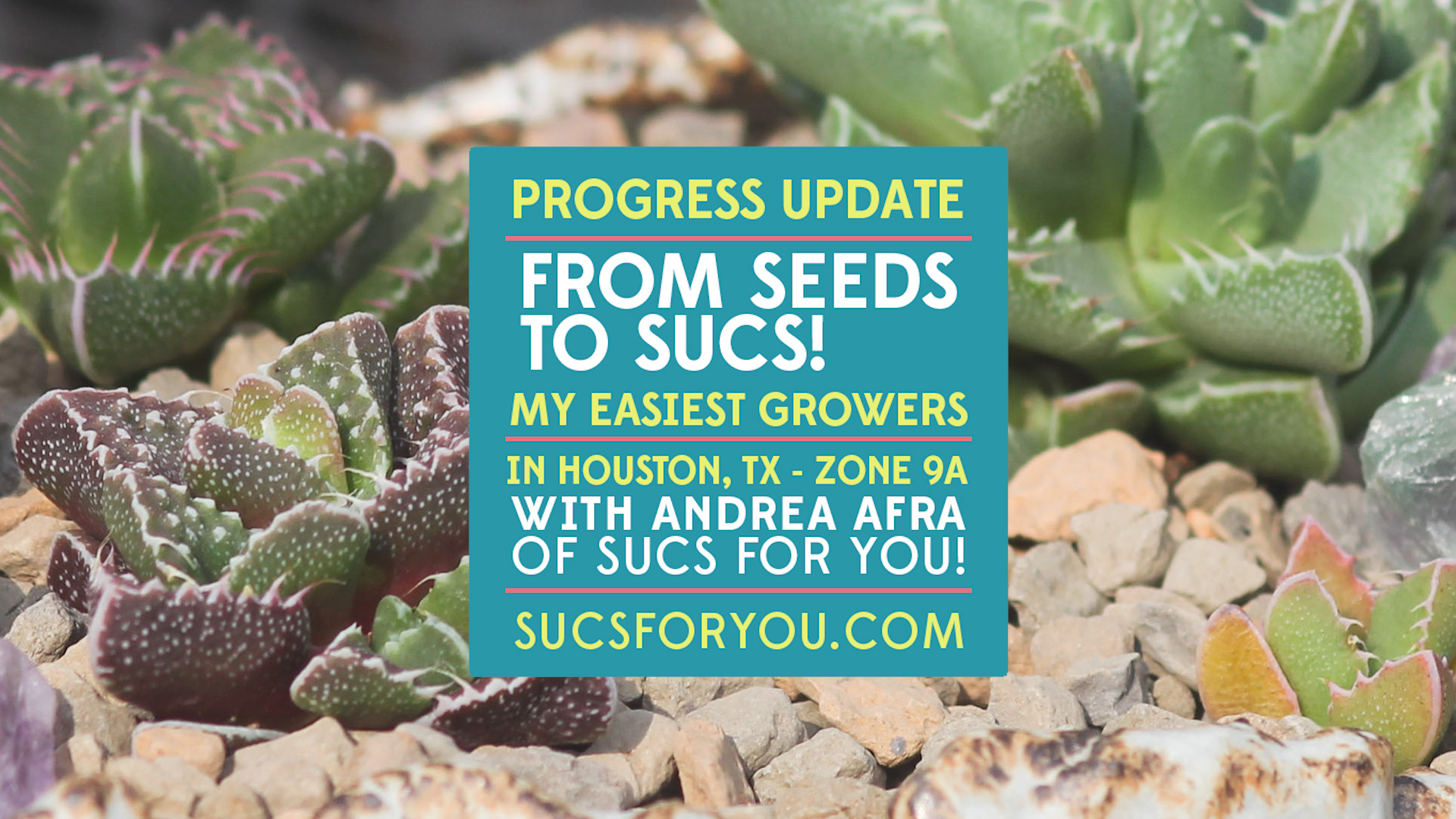 Easiest succulents to grow from seed - a progress video